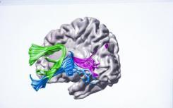 指令如何改变与挣扎的读者的大脑电路