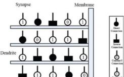 使用物质状态搜索算法进行训练可以进行神经元模型修剪