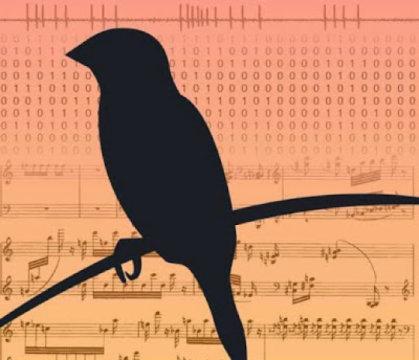 Songbird数据为学习感觉运动技能提供了新的理论