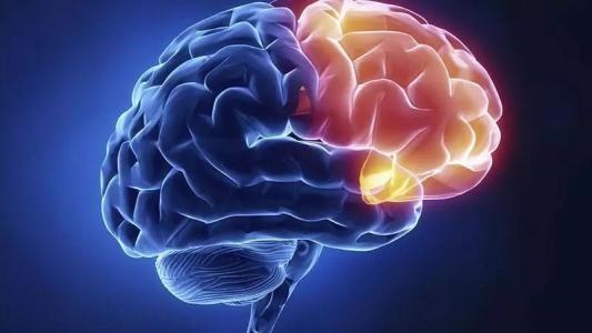 Zika暴露胎儿的连续成像显示大多数人具有正常的大脑发育