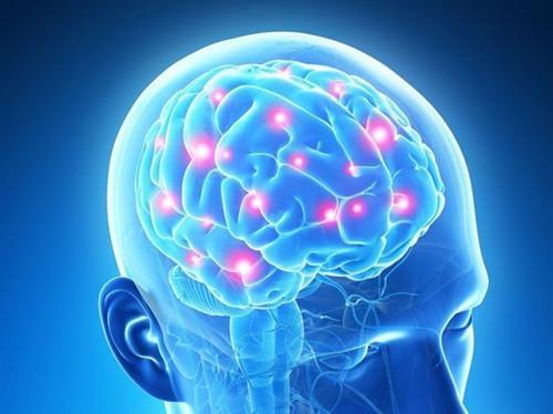 解码大脑的学习机器
