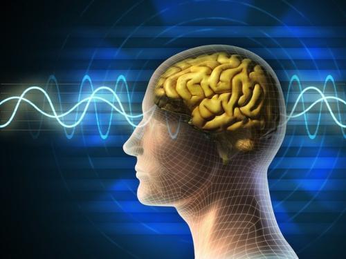 大脑的语言学习窗口一直持续到成年