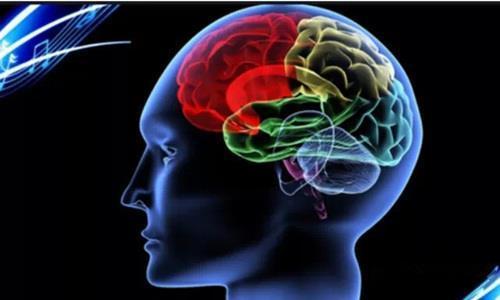 新的大脑映射技术突出了连接和智商之间的关系