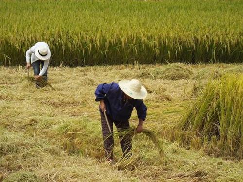 落实农业农村优先发展总方针