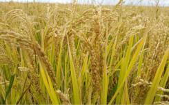 保障重要农产品有效供给