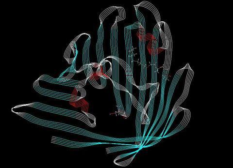 容纳DNA的蛋白质状态控制细胞如何维持其身份