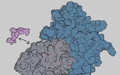 研究揭示了关键免疫系统蛋白的动力学