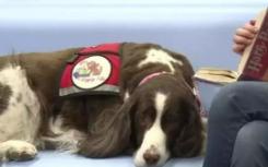 引入治疗犬帮助畏惧校园的幼儿园的孩子热情地入学