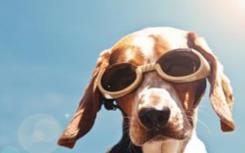 治疗犬帮助学生在学术上蓬勃发展