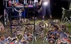 家庭烧烤时爬来50多只大螃蟹