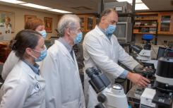 奥本大学的研究人员首先在动物体内发现了天然的金属纳米颗粒