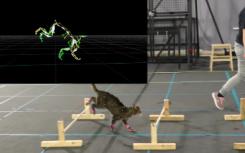 这个猫动作捕捉视频很完美