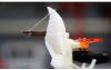 新型机器人可以使用合成蝙蝠耳来精确定位声源