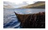 研究人员说种植的海藻可以吸收过多的营养困扰着人类健康和海洋生物