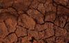 西班牙dehesas的岩石湿度植被的额外水源