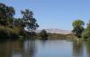 加州河流沿岸的生物多样性热点受到威胁
