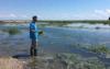 了解盐沼植物如何发出碳捕获能力的信号