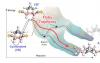 化学反应使用飞越轨迹摆脱能量障碍