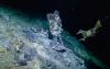 研究检查了深海微生物捕食者在热液喷口中的作用