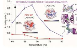 受大自然启发的工程蛋白质可能有助于塑料