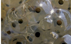 生物烟花展示了3亿年的制作过程