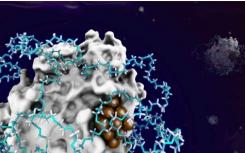 通过从头方法合成的杂化酶催化剂用于扩大生物催化
