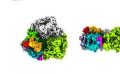光合海洋细菌中的独特色素揭示了它在弱光下的生活