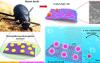 仿沙漠甲虫研制的具有优异水包油乳化分离性能的磁性破乳剂